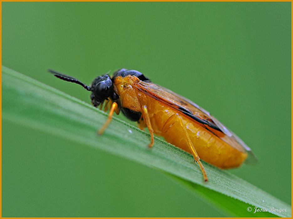 Insekt (starke Steigung)