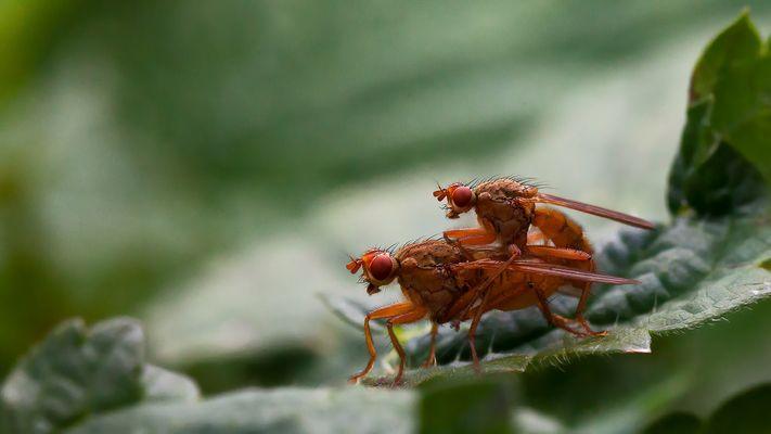 Insekten 001