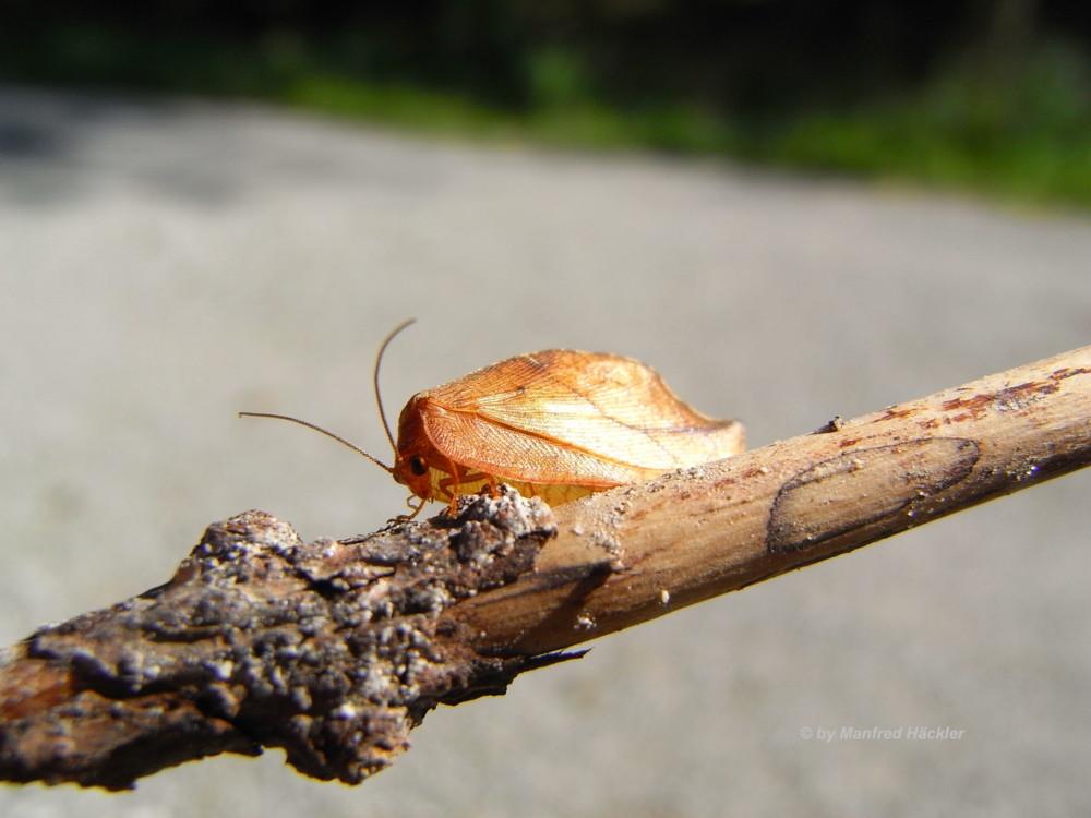 Insekten 003