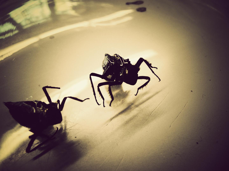 Insekten (2008)