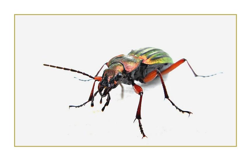 Insekten...