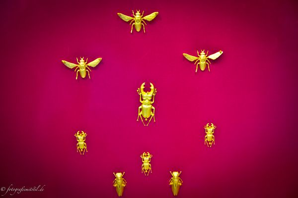 Insekten als Dekoration im Schauenster!