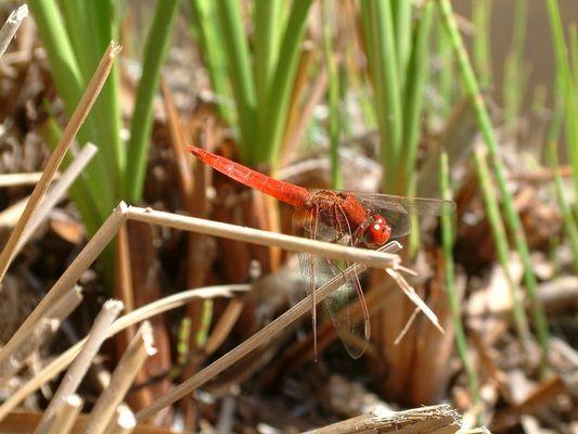 Insekten am Teich - Makroaufnahme
