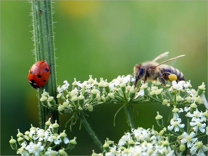 Insekten auf der Alb*