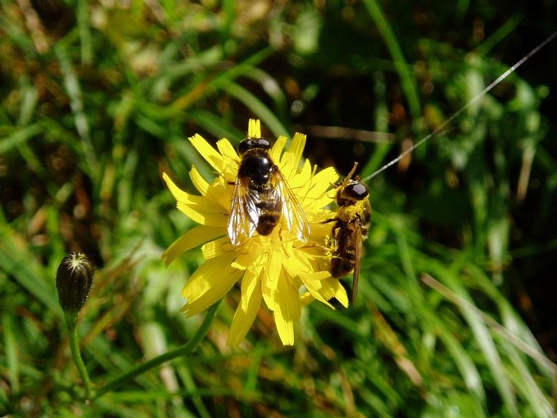 Insekten beim Mittag!