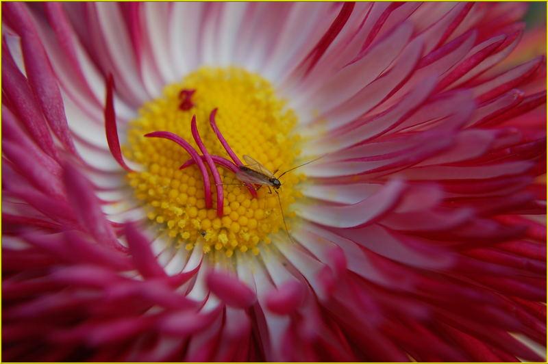 *Insekten-Mahlzeit*