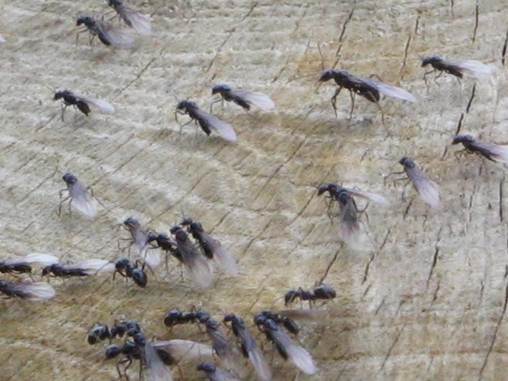 Insekten-Run