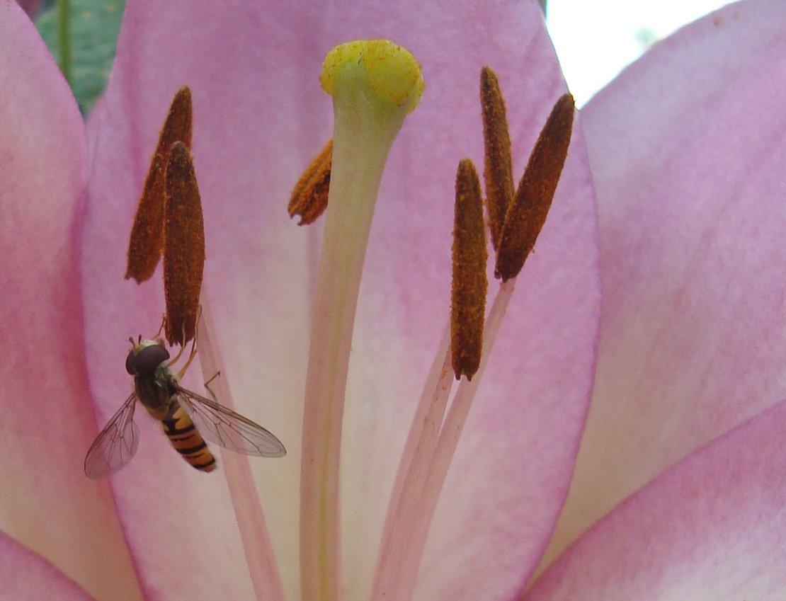 Insekten sind doch immer wieder interesant^^