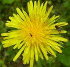 Insekten treffen Blume