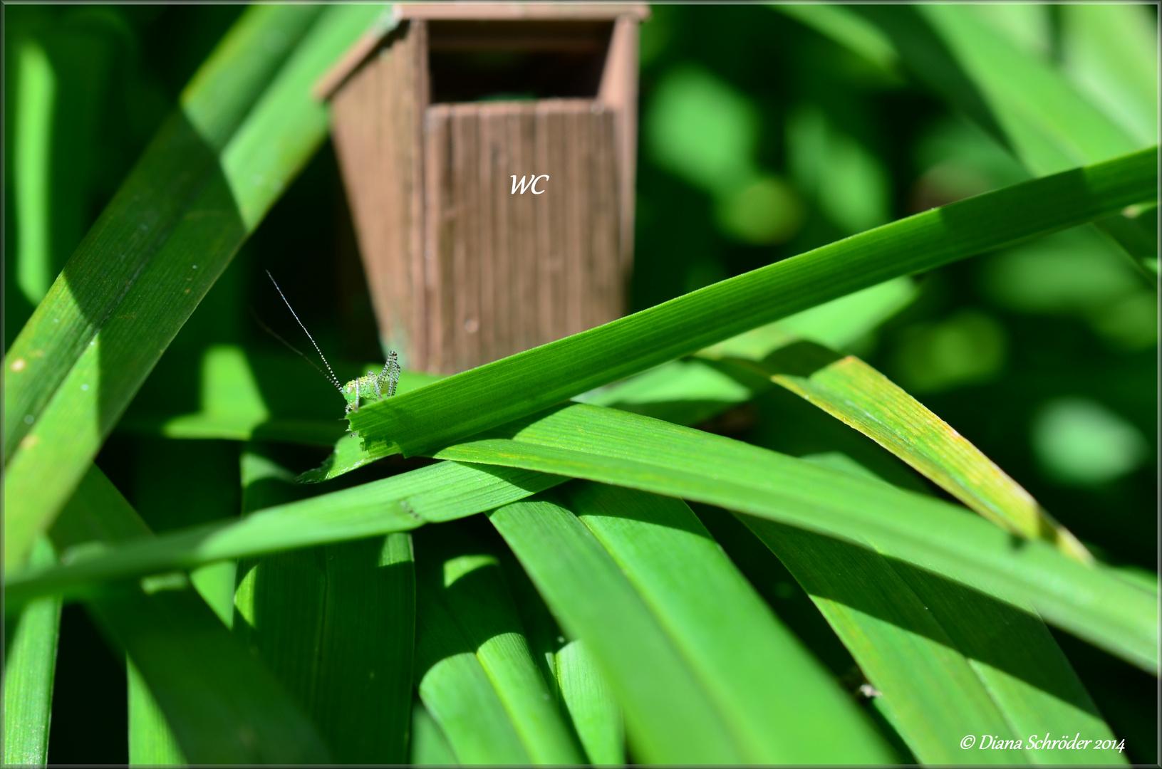 *Insekten-WC*