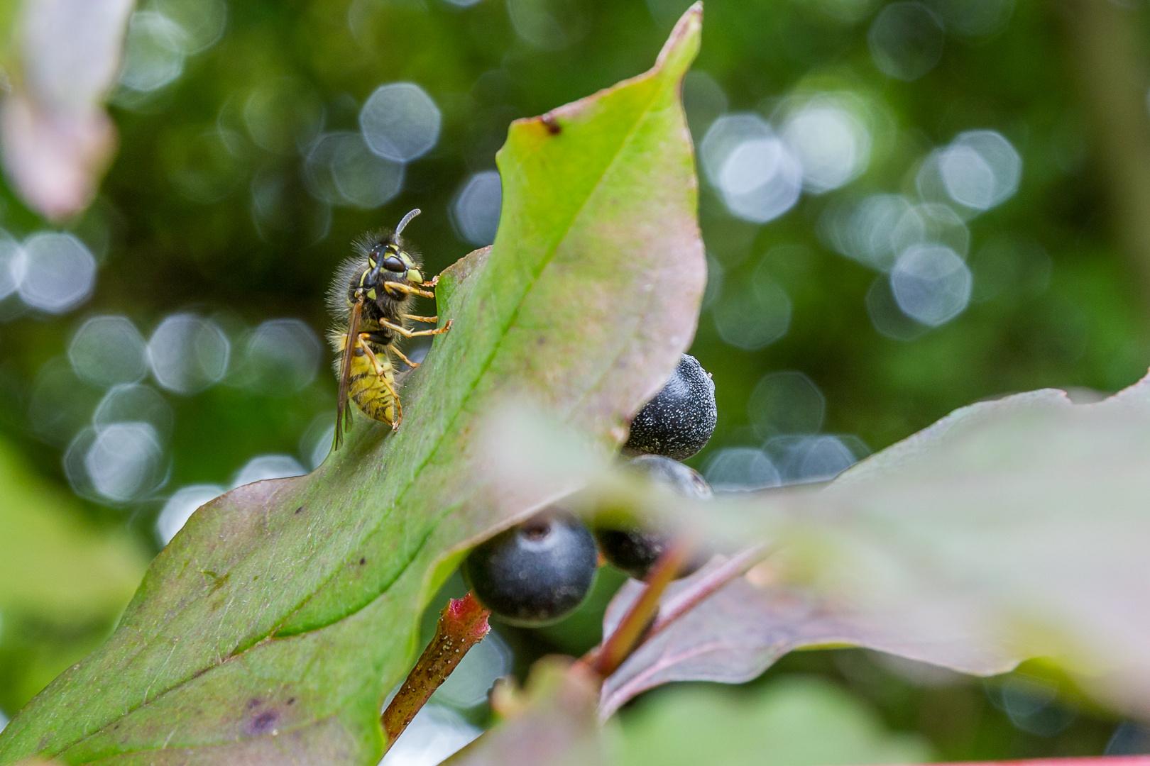 Insekten_1