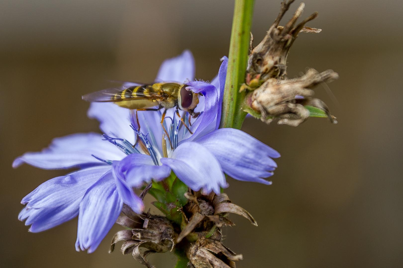 Insekten_2