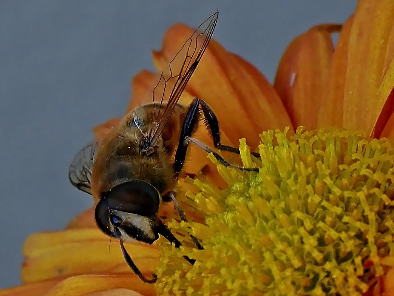 Insektenaugen