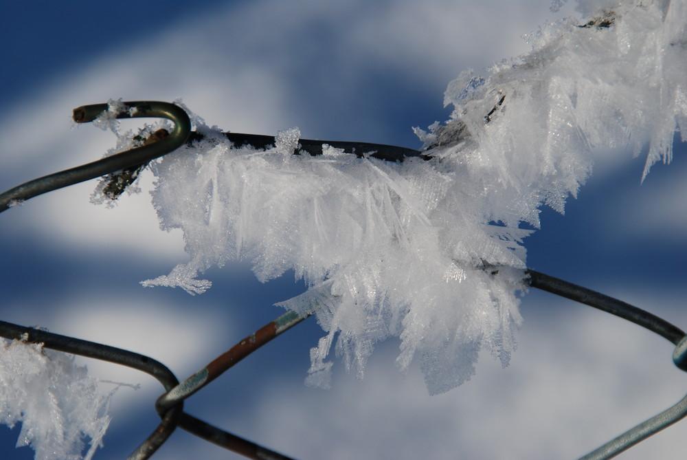Insektenflügel aus Eis