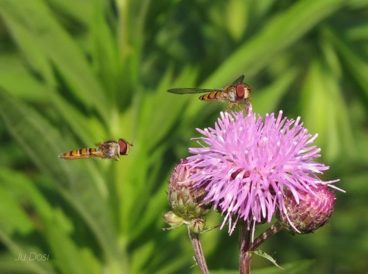 Insektenfrühstück im Garten