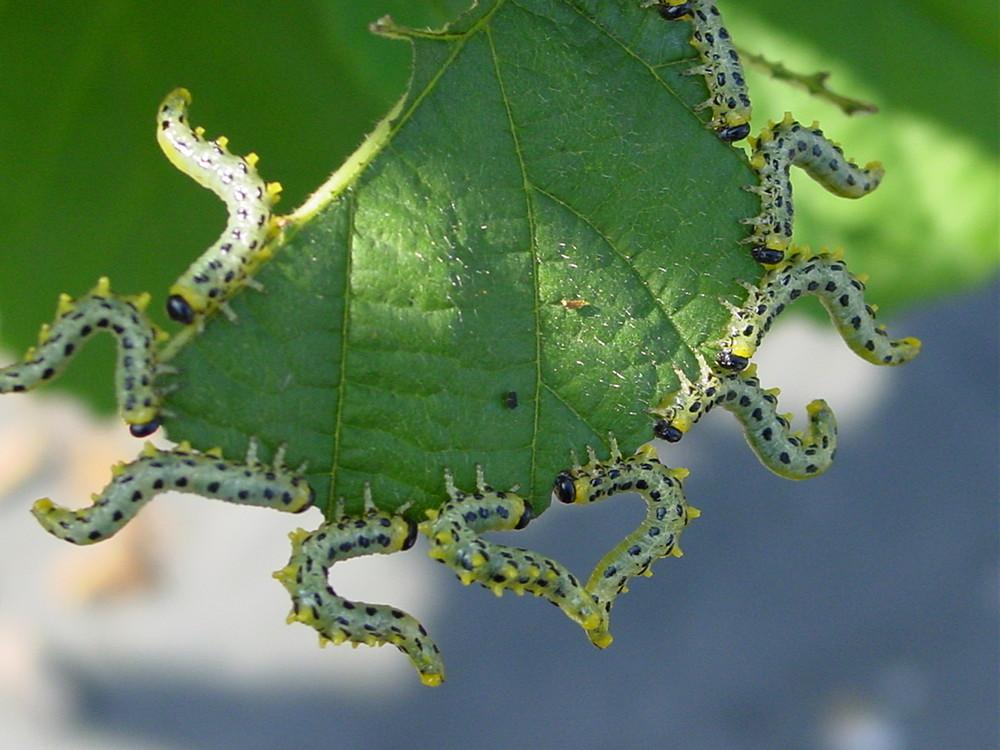 Insektenliebe