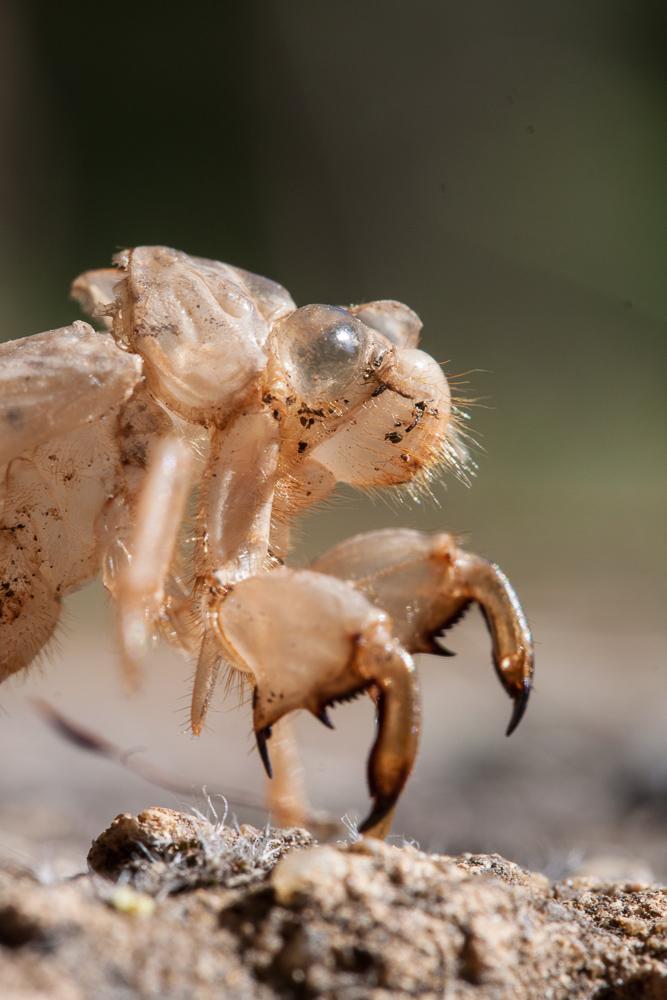 Insektenmonster