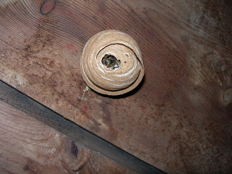 insektennest foto bild tiere wildlife insekten bilder auf fotocommunity. Black Bedroom Furniture Sets. Home Design Ideas