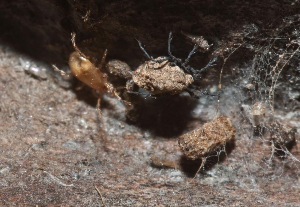 Insektenrätsel