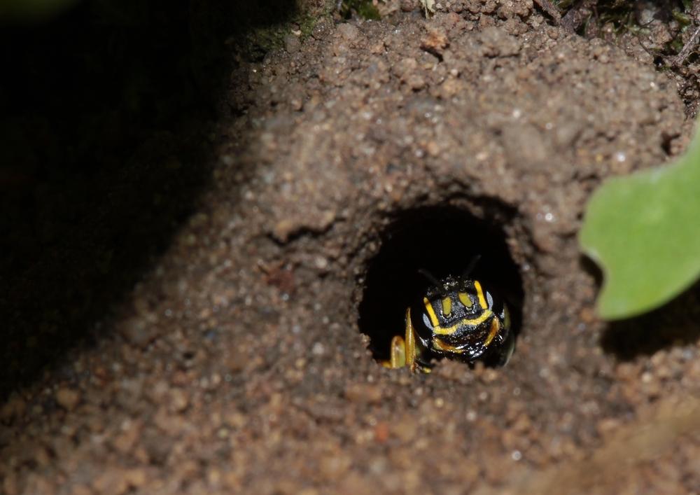 Insektenrätsel gelöst