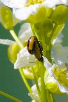 Insektensex