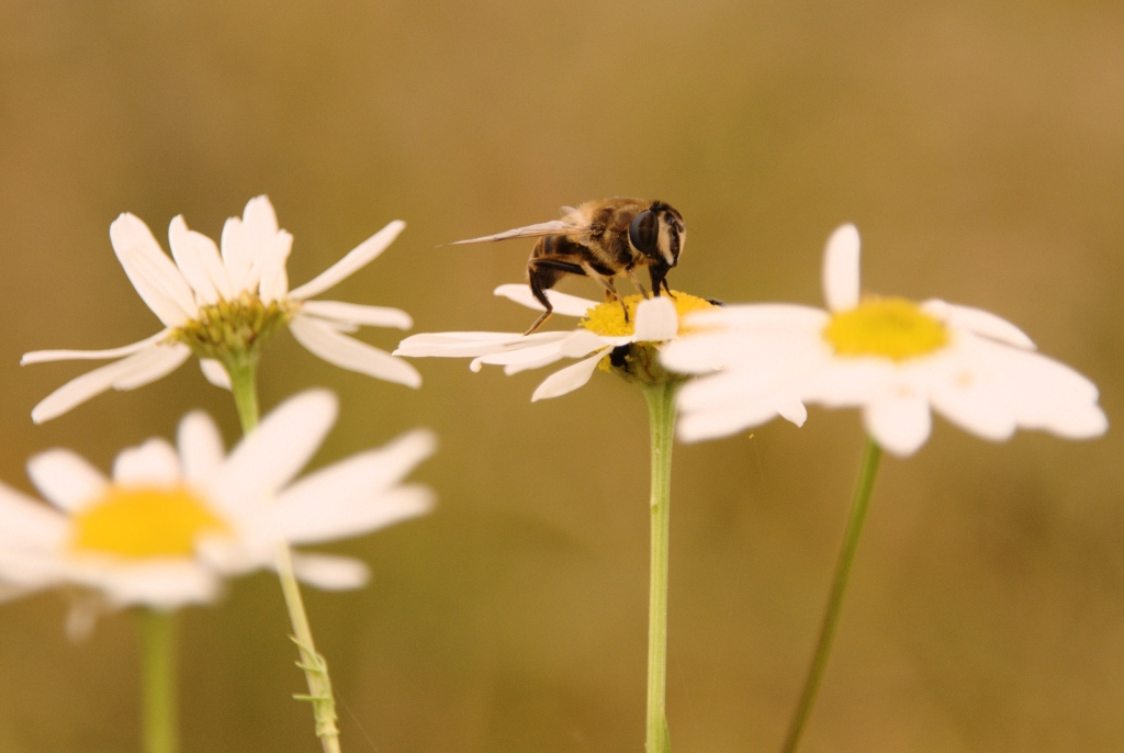 Insektentier