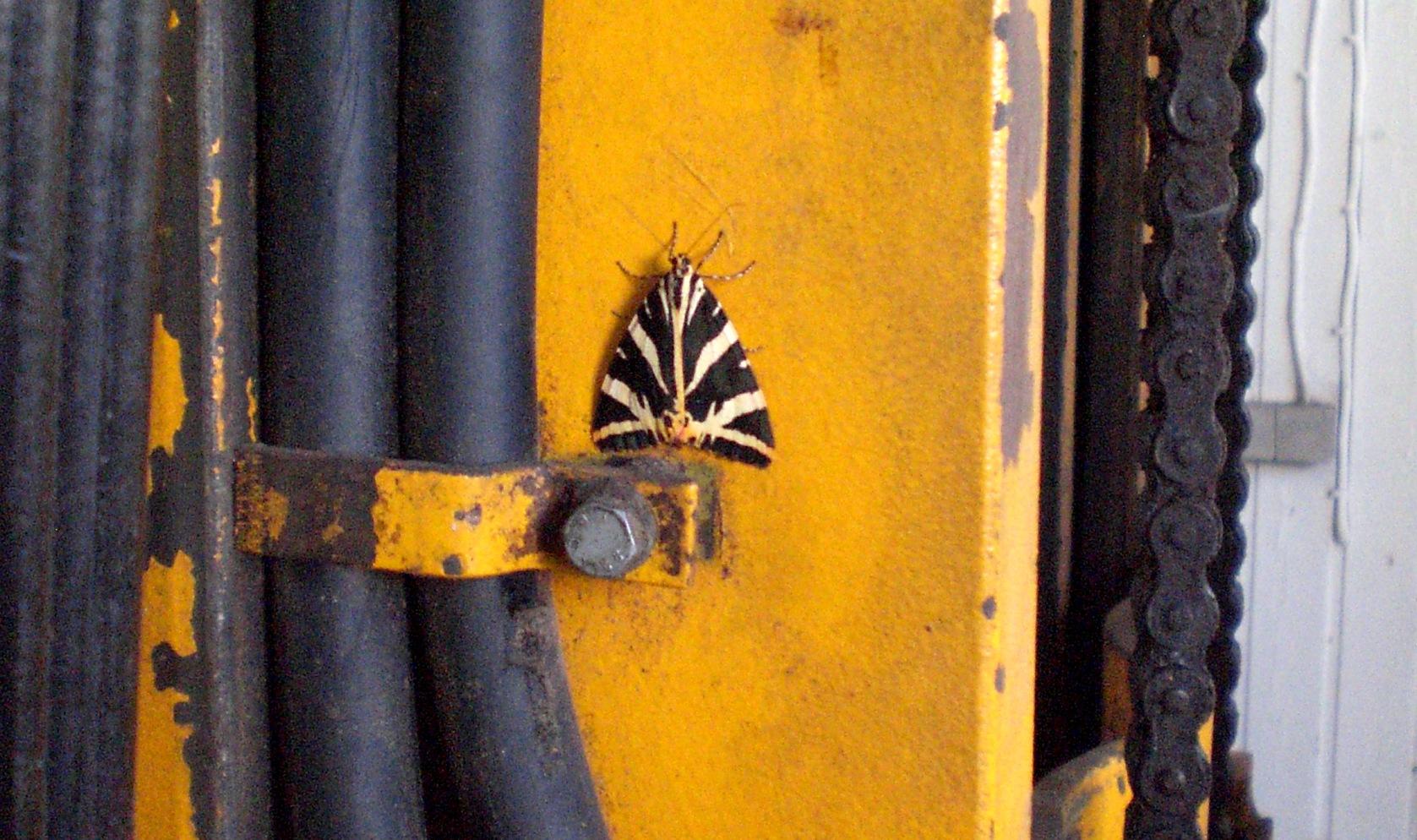 Insektoide Lebensform auf technischem Gerät