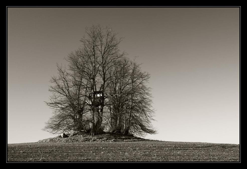 Insel der Bäume