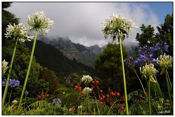Insel der Berge und Blumen