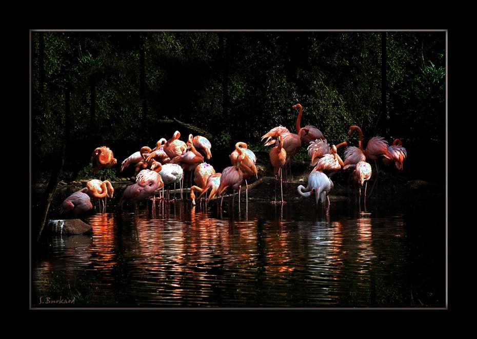 >>> Insel der Flamingos