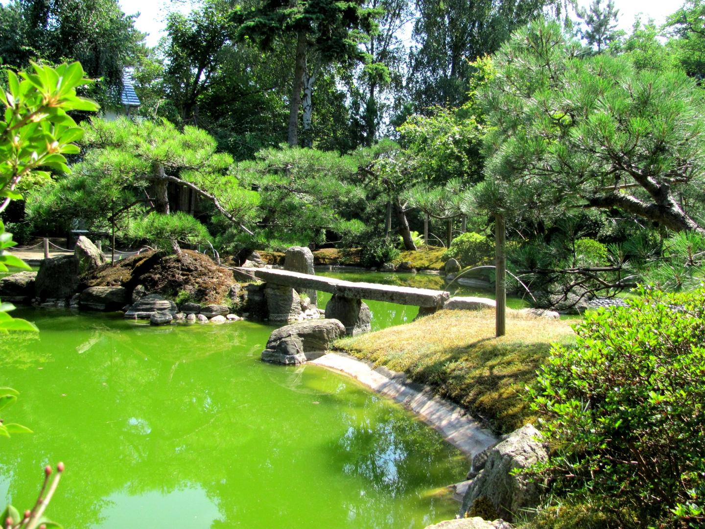 Insel im japanischen garten