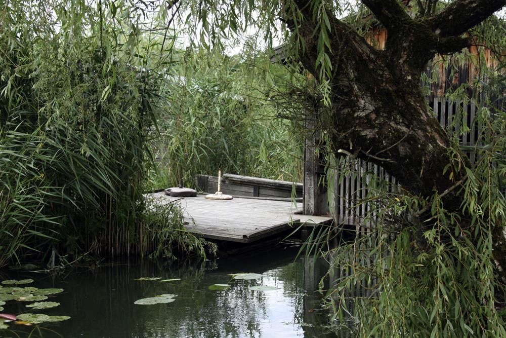 Insel im Urwald