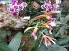 Insel Mainau / Frauenschuh ??? Orchideen 6