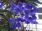 Insel Mainau / Orchideen 5
