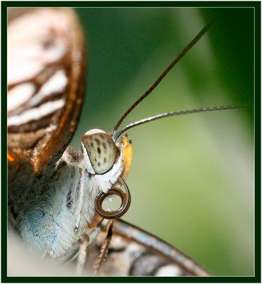 Insel Mainau Schmetterlingshaus