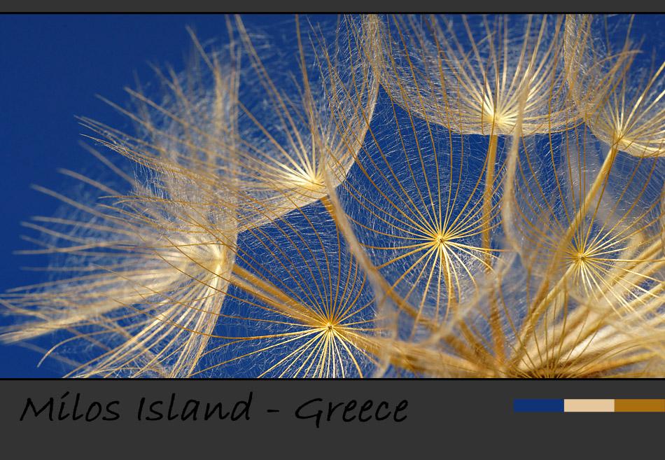 Insel Milos – Faszination Makrofotografie