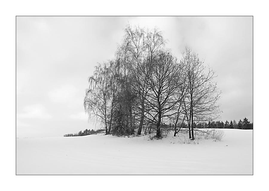 Insel mit Bäumen