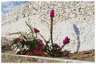 Insel Mykonos 2