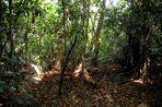 Insel Regenwald