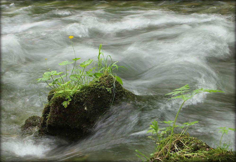 Inselblümchen in wildem Wasser