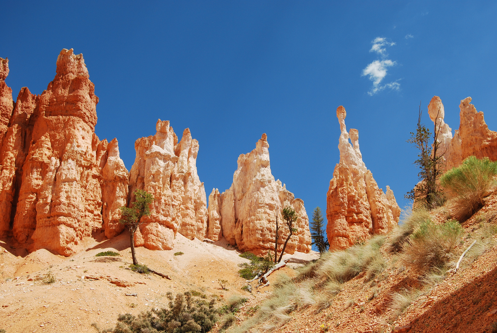 Inside Bryce Canyon
