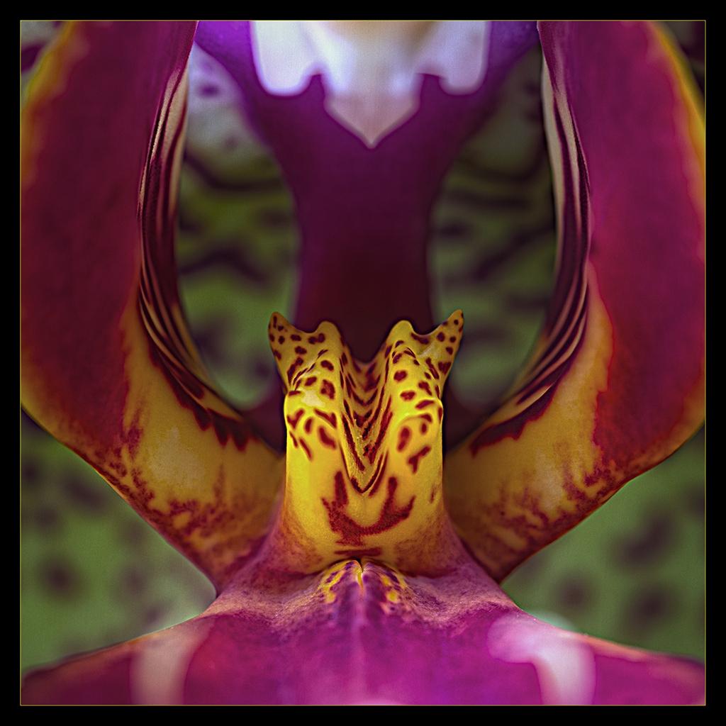 inside Orchidee