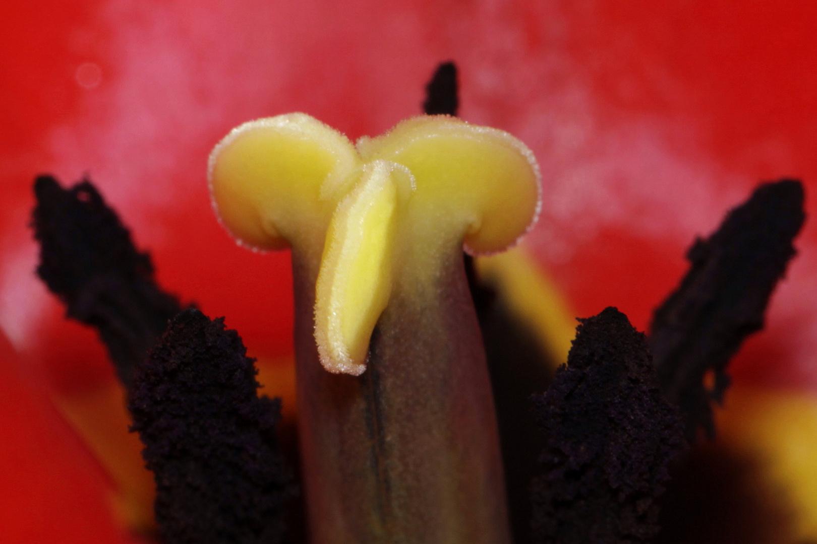 inside tulip (2)