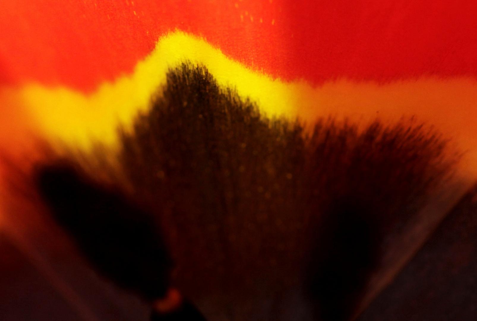 inside tulip