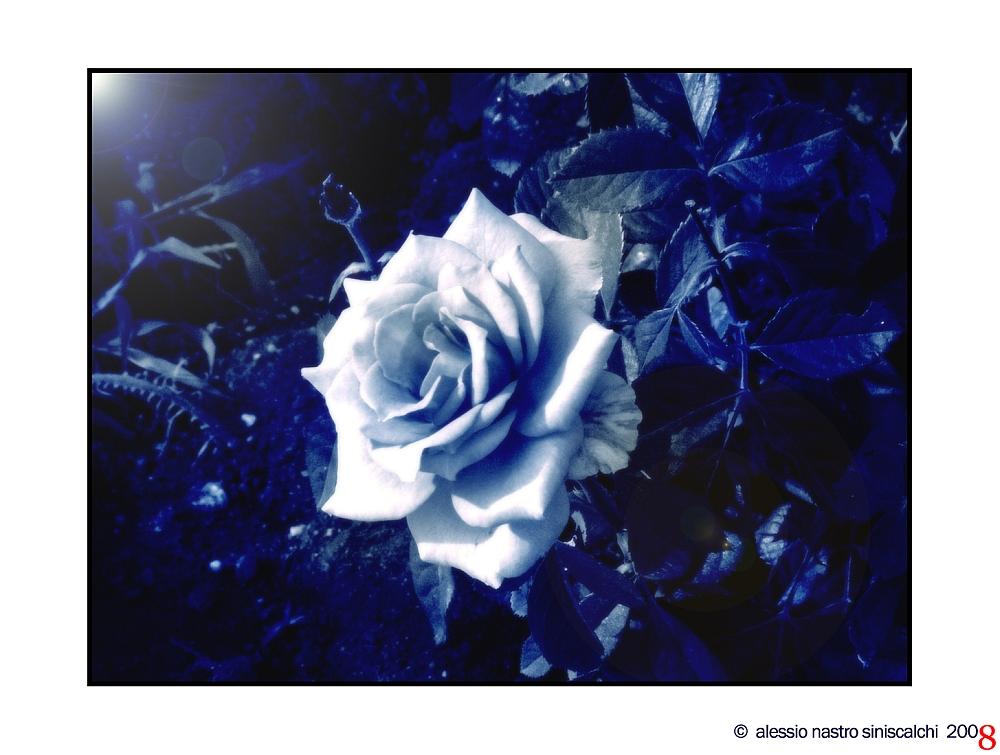 .: Inso[M]nia :. - Sometimes I'm blue...