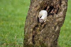 Inspektion einer Baumhöhle ...