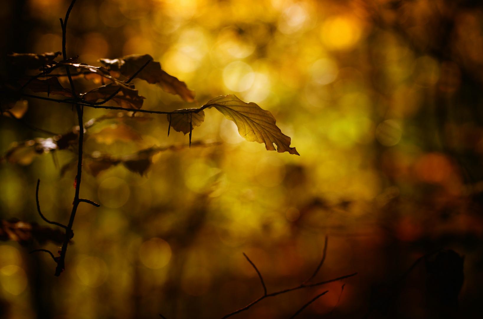 Interaktives Licht im Laubwald