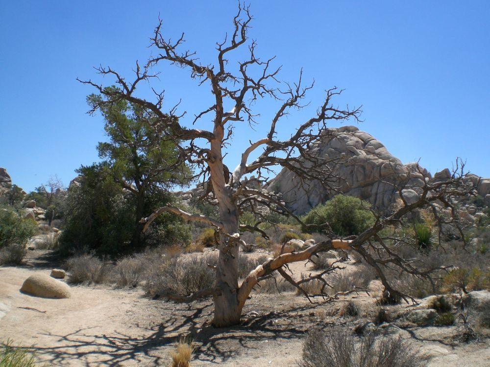 interessant wie ein Baum aussehen kann, und so schön, obwohl er nicht mehr lebt...