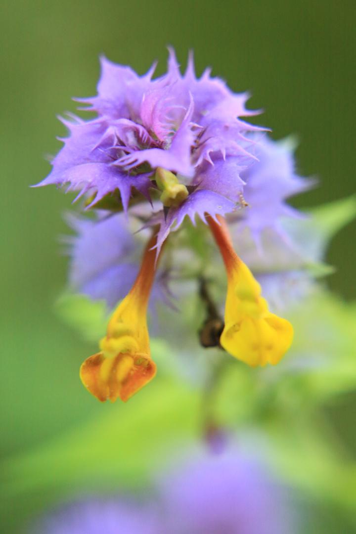 Interessante Wildblume