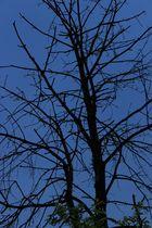 Interessanter Baum